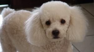 Mel: minha heroína canina!